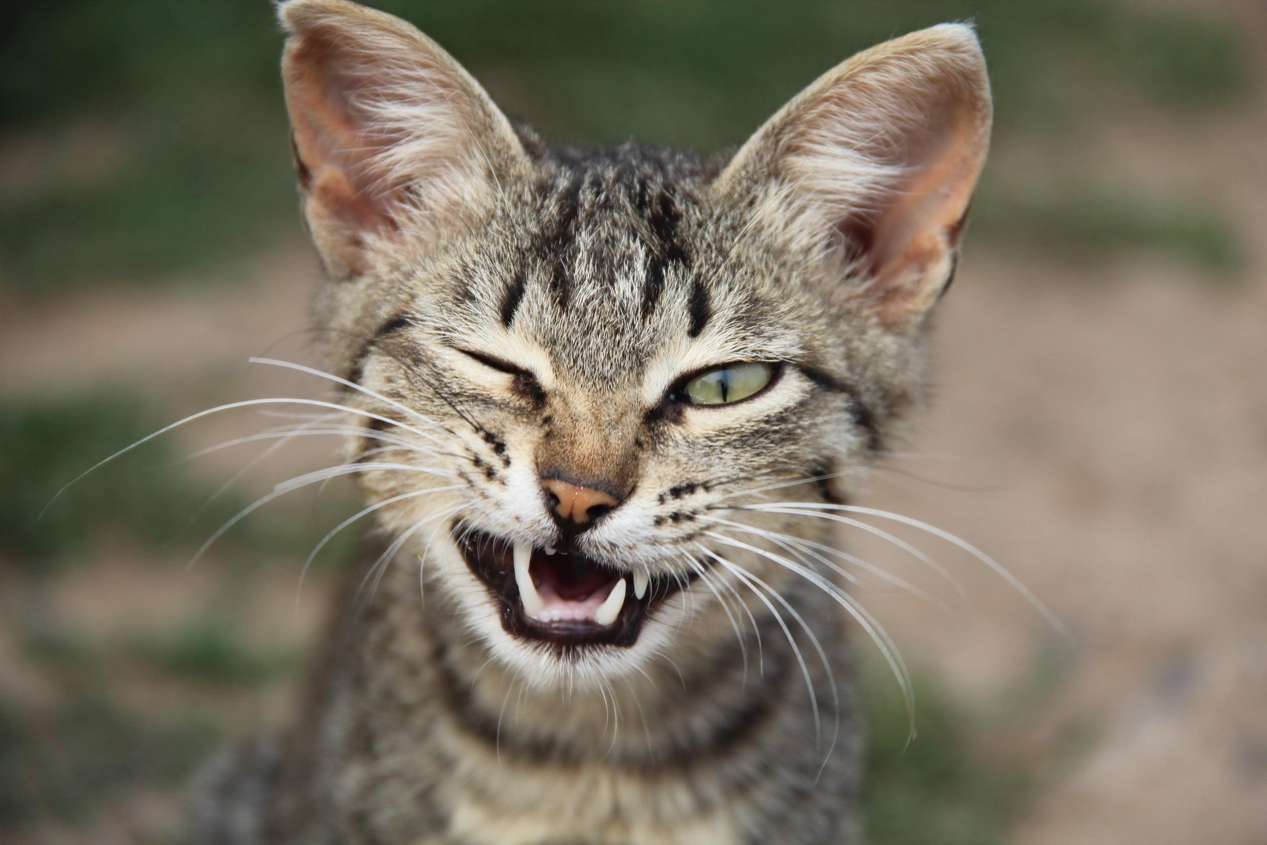Лайфхаки для кошатников