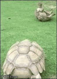 woXKWyTQ7qALRmdaVN1U_Turtle Flip
