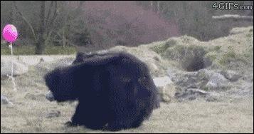 YXzsva2pRPeMmQdmWno4_Balloon Bear