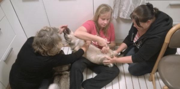 dog on human hands