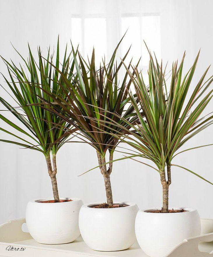 9 самых неприхотливых растений, очищающих воздух от вредных веществ