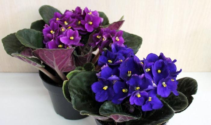 Смотреть Комнатные цветы-талисманы по знаку зодиака. Теперь точно знаю, какой именно вазон мне нужен видео