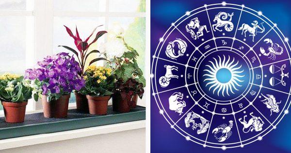 Комнатные цветы-талисманы по знаку зодиака. Теперь точно знаю, какой именно вазон мне нужен
