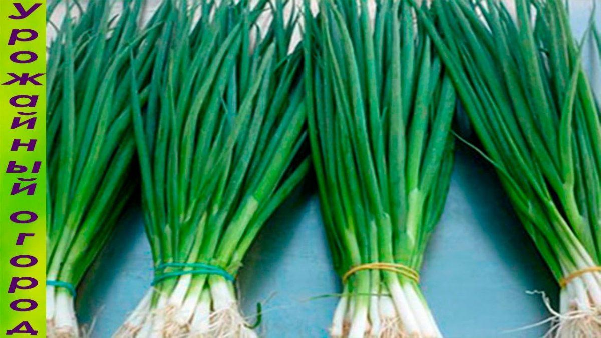 Супер способ выращивания зеленого лука без земли и горшка.