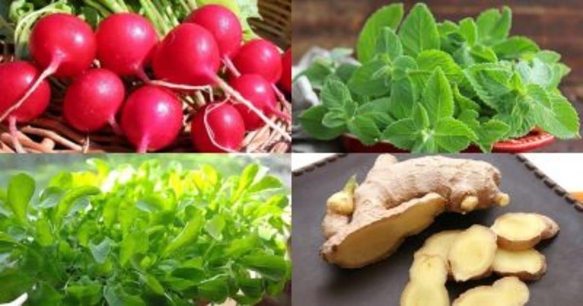 5 растений, которые вы сможете выращивать прямо на кухонном подоконнике