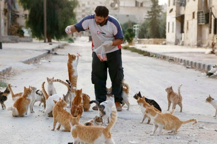 мужчина кормит котов на улице