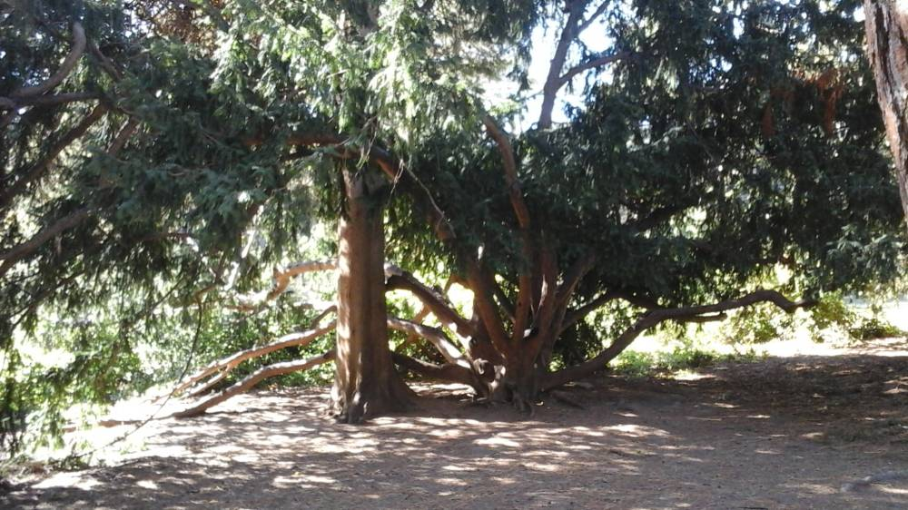 21 progulka po parku vorontsovskogo dvortsa v alupke