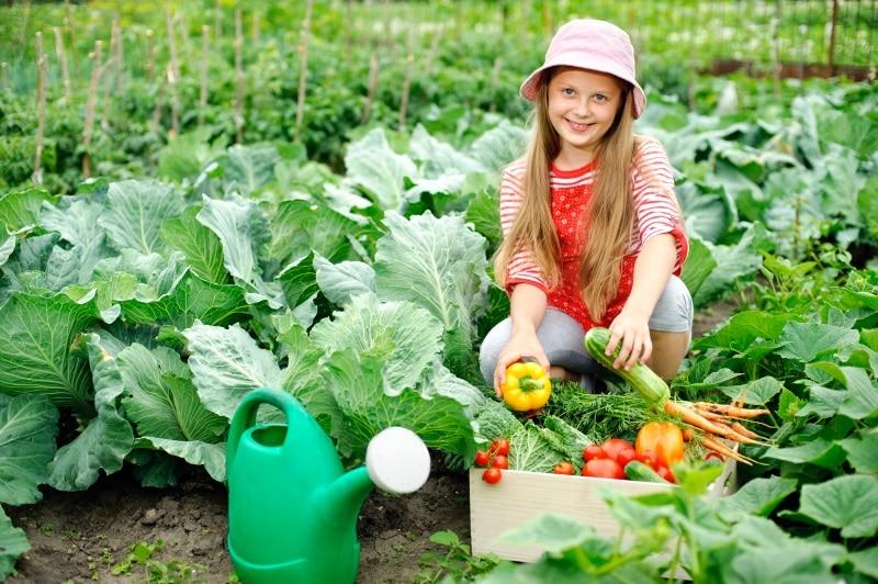 как выращивать капусту в огороде