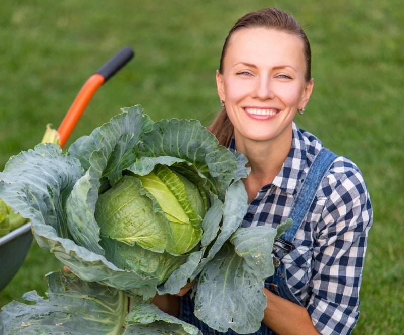 сад и огород как вырастить капусту