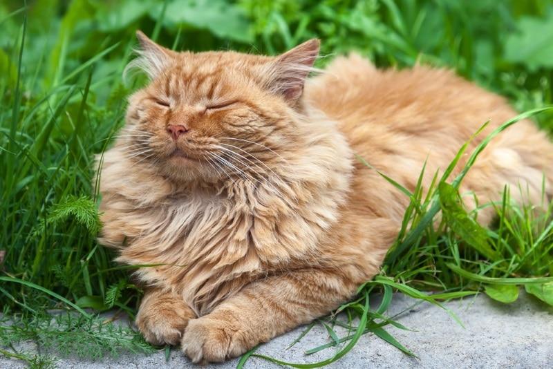 для кота когтеточка