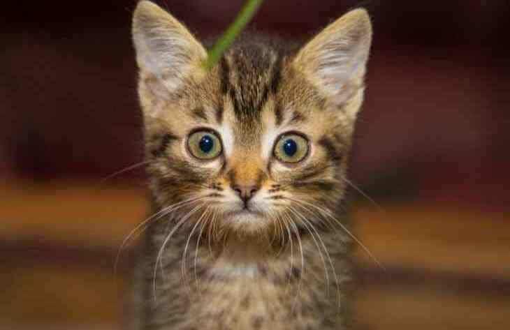 Домашние лайфхаки: как убрать запах кошачьей мочи