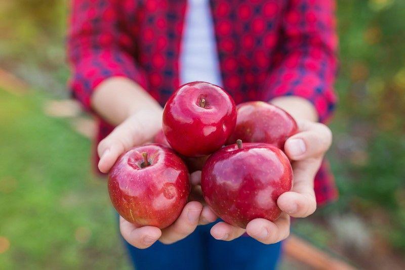 яблочный спас в августе