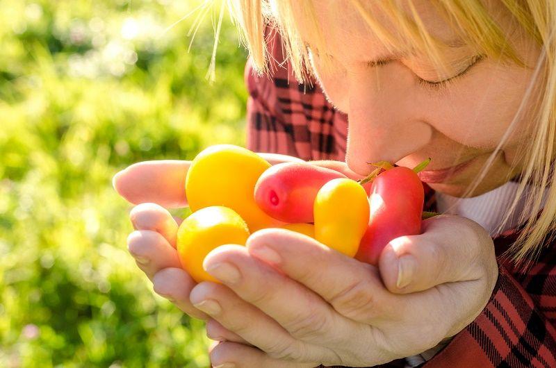 как выбрать вкусные помидоры