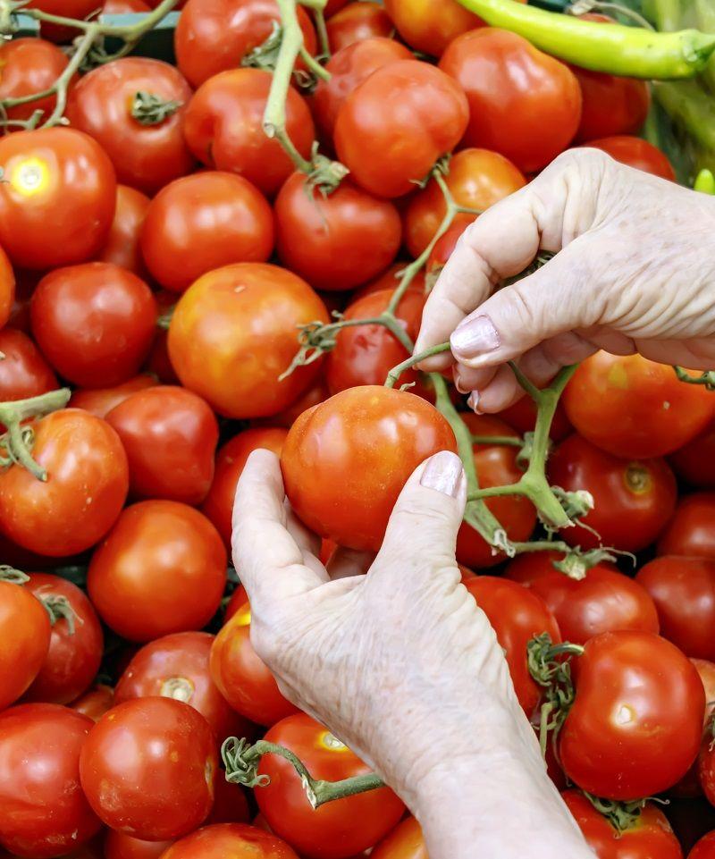самые вкусные гибриды томатов