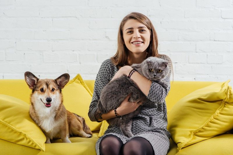домашние животные кошка