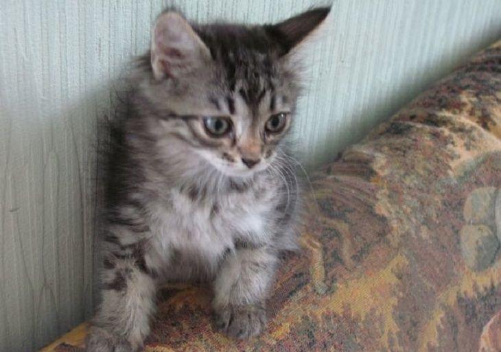 «Начал гладить, и у него слезы потекли». 17 часов дальнобойщик вез умирающего котенка в клинику