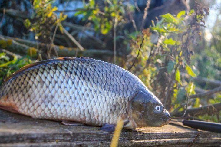 Как избавиться от запаха рыбы в холодильнике