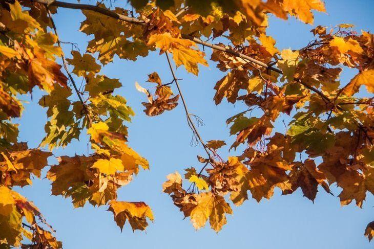 Ласковая осень. Прогноз погоды на неделю с 2 по 8 сентября